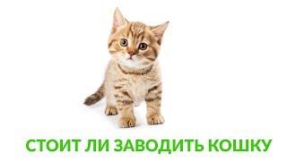 Стоит ли заводить кошку. Ветеринарная клиника Био-Вет.