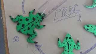 Science Projects By Class 8 Students 11 Life Cycle Of Frog