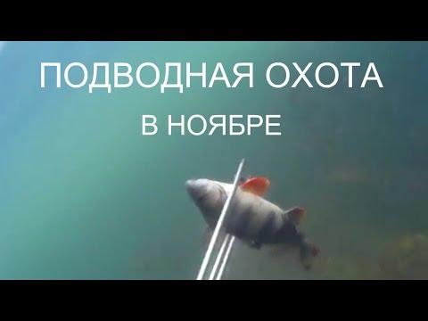 Подводная охота. 2015