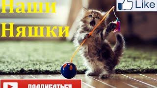Милые котята, маленькие крохи. Умилительное видео