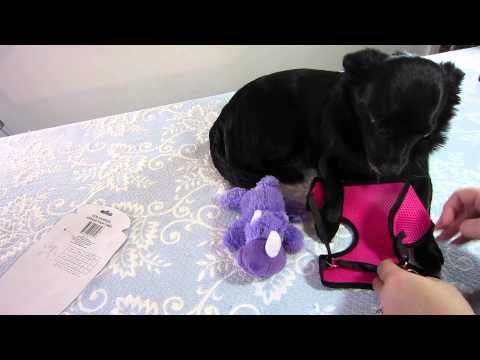 Dog Harness Review: Greenbrier International (