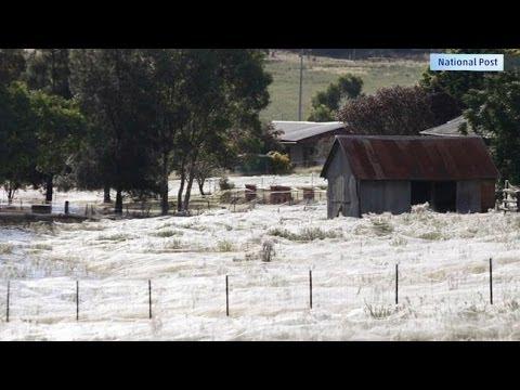 Spider Webs Conquer Australia