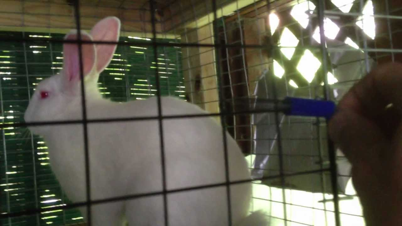 how to make rabit cage