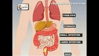 Video From Tasting To Digesting - Science download MP3, 3GP, MP4, WEBM, AVI, FLV Juni 2018