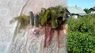 .салат из листьев свеклы.