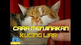 Download Video Begini caranya menjinakan kucing liar MP3 3GP MP4