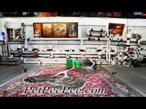 $20,000 Oriental rug clean from dog urine