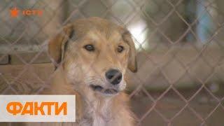 Более 2,5 тыс. собак и кошек! Почему приют для животных готов на четверть