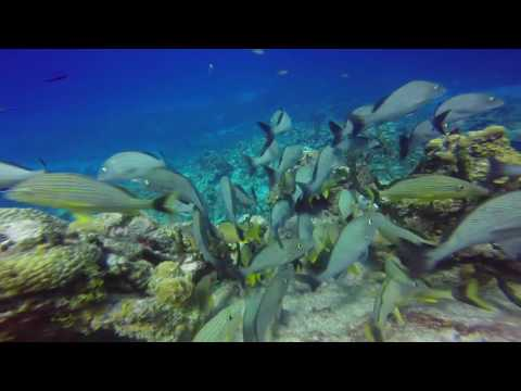 Cayman Island Diving 2016