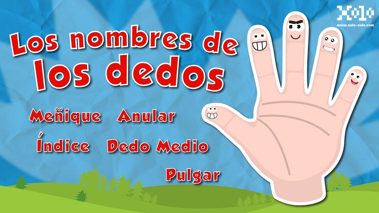 Worksheet. Nombre de los dedos de la mano espaol para nios  Videos Aprende
