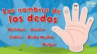 Nombre De Los Dedos De La Mano Español Para Niños Videos Aprende Youtube
