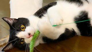 子猫を押しのけて遊ぶ先住猫