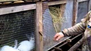 Ферма для кроликов,Прогулка по мини ферме  для кроликов  Малышева