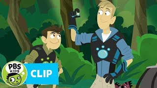 Wild Kratts: Rainforest Tracks thumbnail
