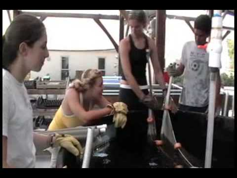 Sail Caribbean Tropical Marine Science