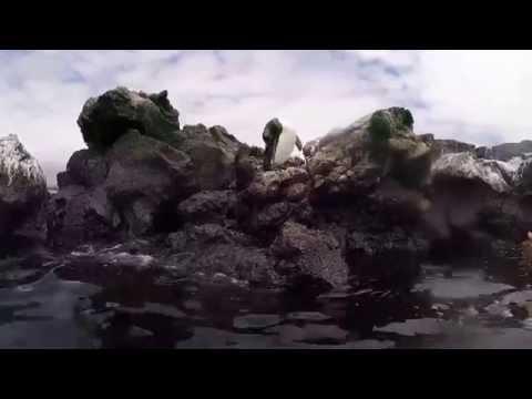 Galapagos Islands - snorkeling