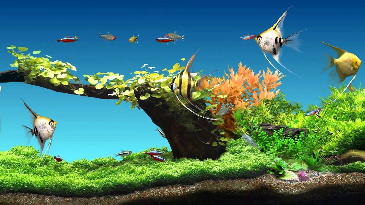 Aqua Garden Wirtualne akwarium Virtual aquarium YouTube