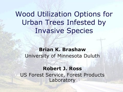 Wood Utilization Options for Urban Trees Infested by Invasive Species