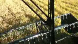 case ih 2388 combines during libero rice harvest in nord ovest italy