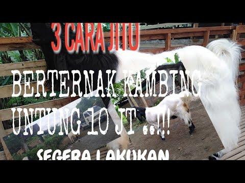 3 CARA BERTERNAK KAMBING.BERHASIL - YouTube