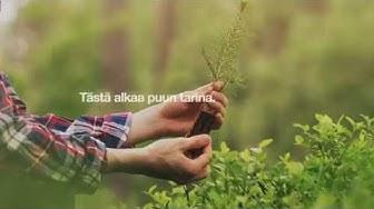 Puut kasvavat takaisin