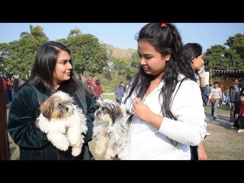 Dog show in lahore 2019 Best dogs in the world the smallest dog in the world Hsn Entertainment