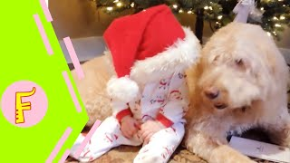 Cute Baby and Animals FAILS - Fun and Fails