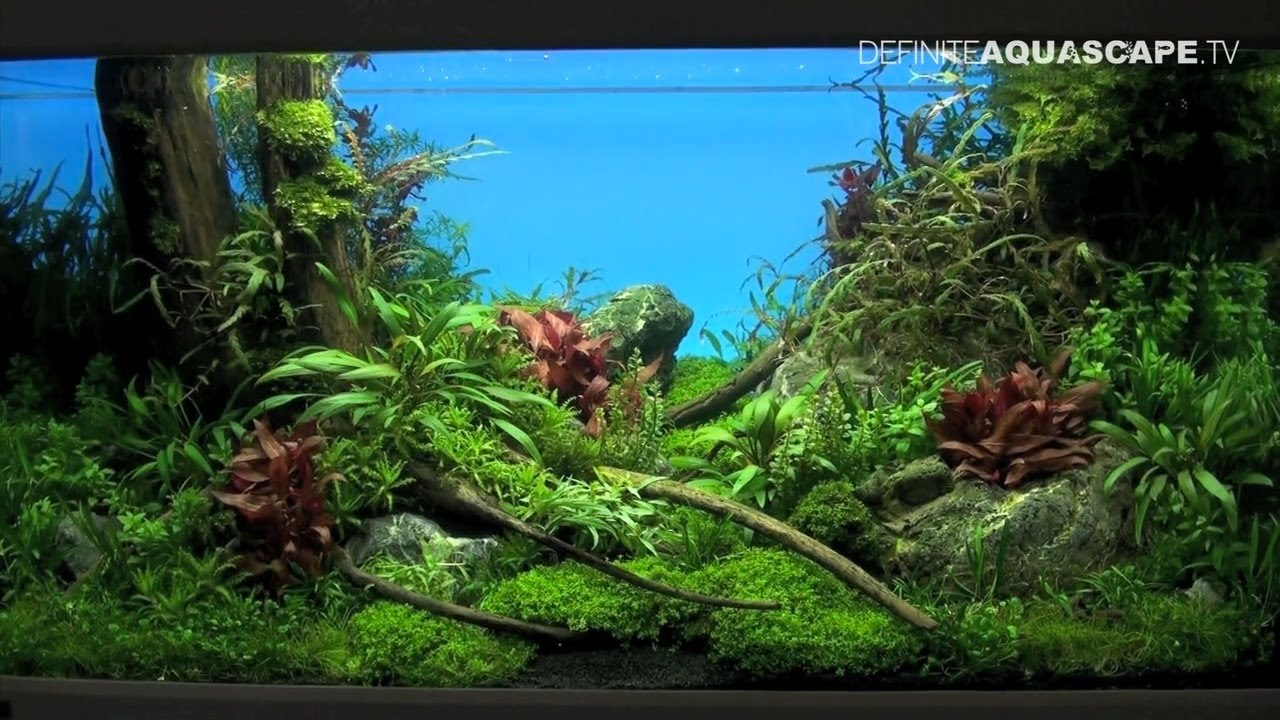Aquascaping The Art of the