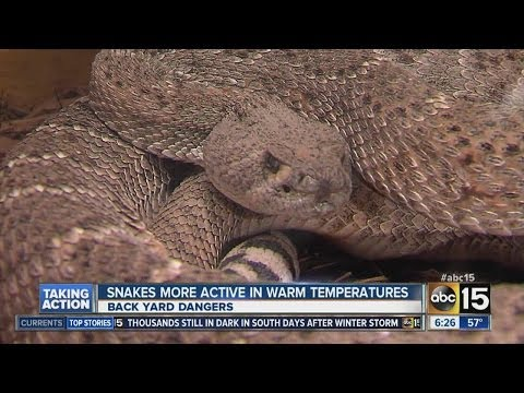 How to protect yourself from snakes: Phoenix Herpetological Society talks snakes, Arizona heat
