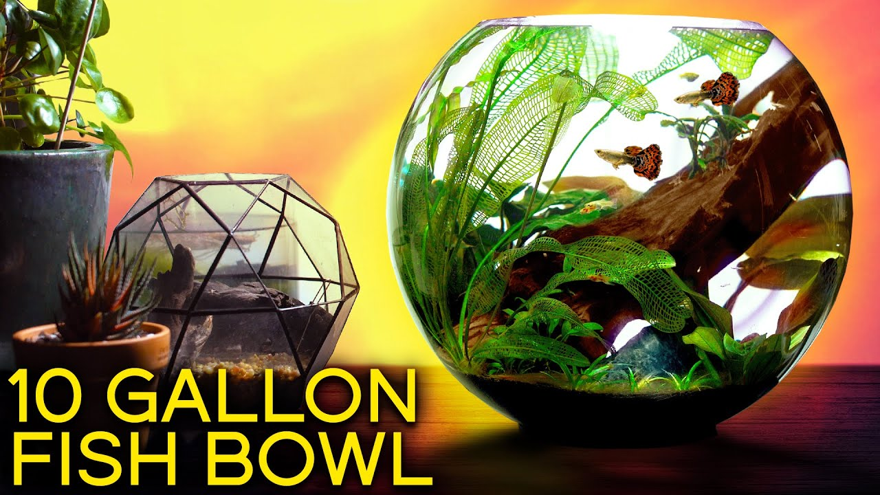 The Ultimate Fish Bowl Youtube