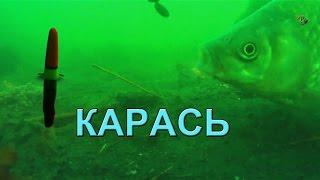 Поклевка КАРАСЯ на поплавочную удочку. Подводная съемка. Рыбалка. Ловля на поплавок(Хронология поклевки одного сошедшего карася на поплавочную удочку :))) Подводная съемка. На этом водоеме..., 2016-02-03T19:09:45.000Z)