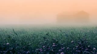 Dubstep - Felxprod.- Mushroom Paradise