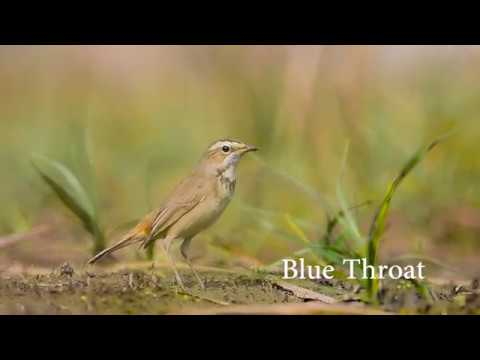 Birds of Punjab - Part two | Nature Un'tamed | India