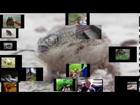 33 Screaming Frogs (at Once)