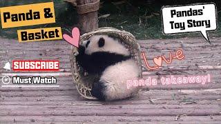 【Panda Top3】Panda and basket are perfect match