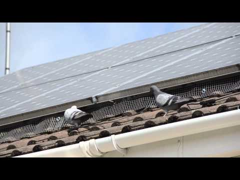 Solar Panel Pigeon Barrier