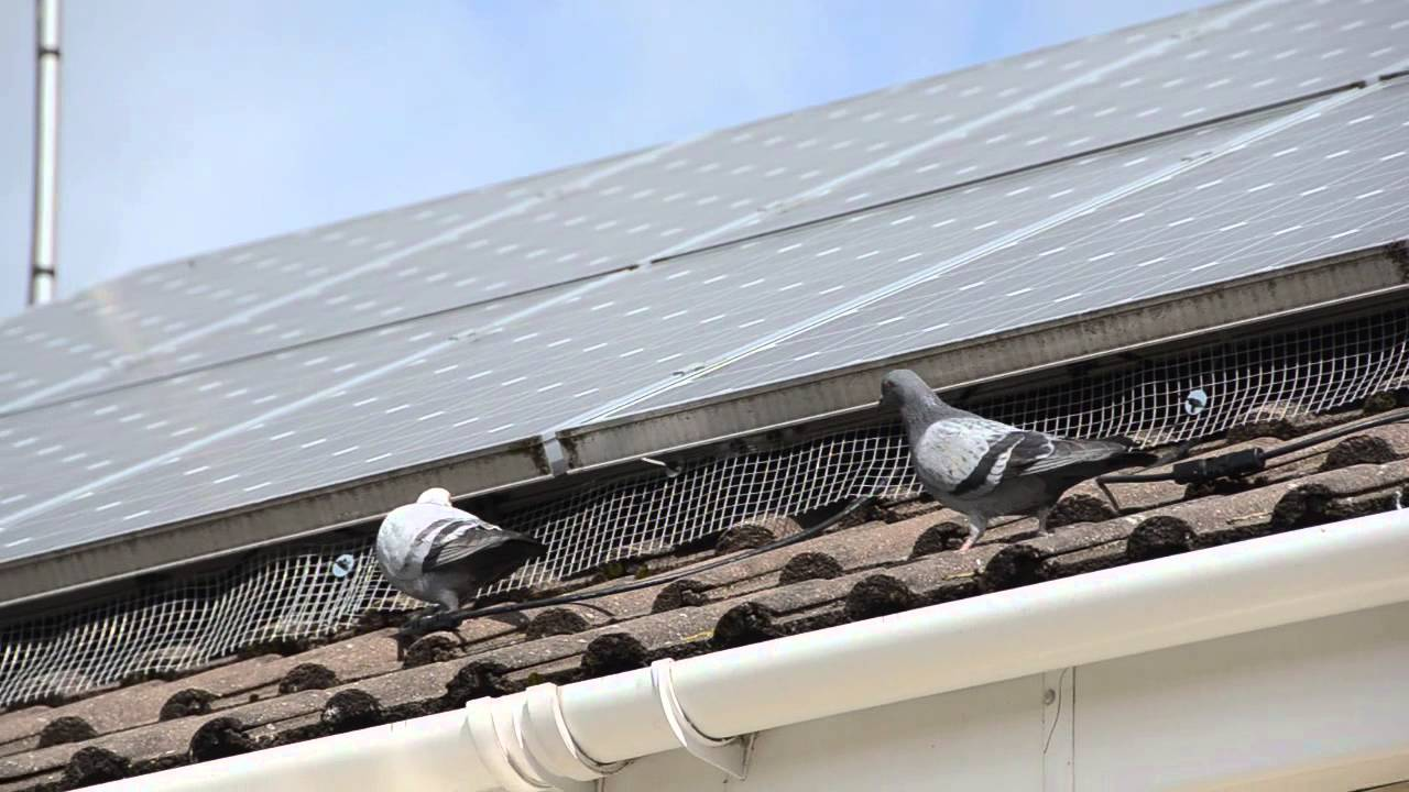 Solar Panel Pigeon Barrier Youtube
