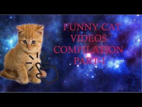 FUNNY CAT VIDEOS COMPILATION PART-1