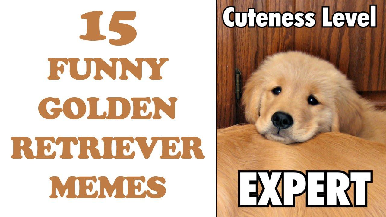 Funny Golden Retriever Memes