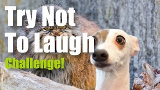 Try Not To Laugh or Grin Challenge - Funny Animals | Awesome Pet Videos