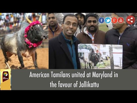 American Tamilans united at Maryland in favour of Jallikattu