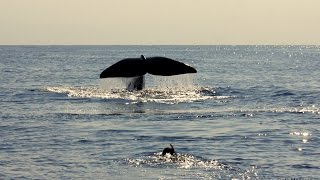 TURSIOPS 1ª Campanya Balearic Spermwhale 2014