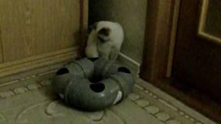 Самодельная игрушка для кошки. Cheap and easy homemade cat toy