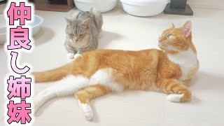 cute cats basking in the sun together