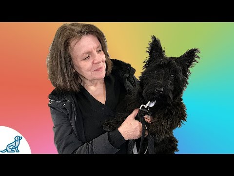 The Obedience Skill That Saved This Scottish Terrier - Professional Dog Training Tips