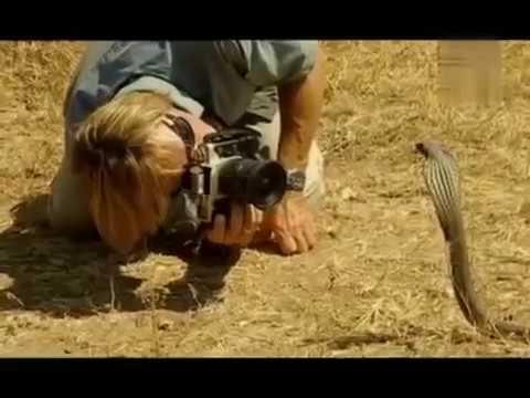 Giftige 7 Schlangen Doku  inklusive giftschlangen biss
