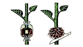 видео Размножение растений