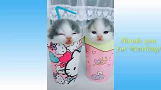 Cute Pets And Funny Animals Compilation #3   Pets Garden