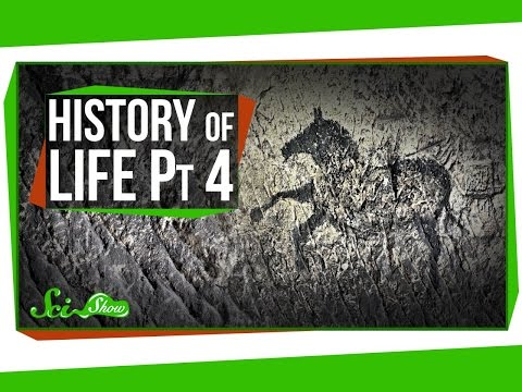 A Brief History Of Life: Rise Of The Humans