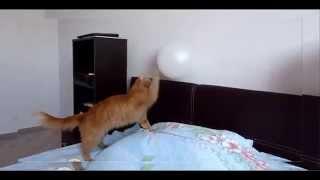 Кот и шарик видео